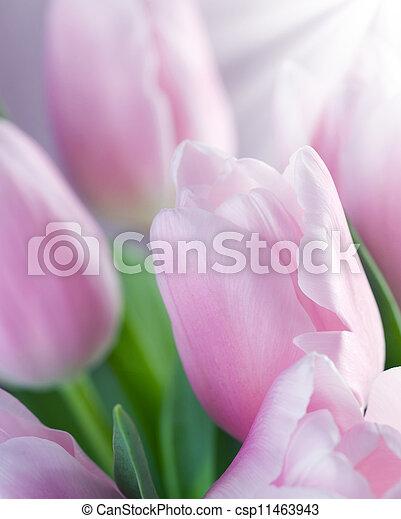 printemps - csp11463943
