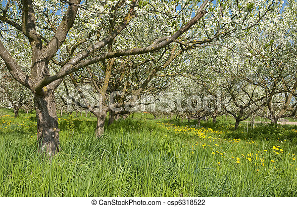 printemps - csp6318522