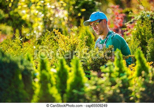 Pro Gardener in the Garden - csp65509249