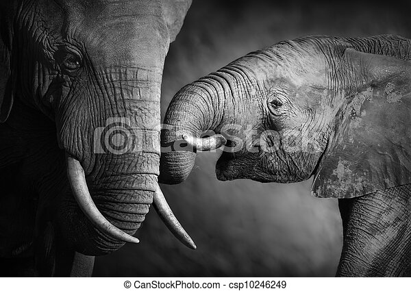 Elefantenliebe (Artistische Verarbeitung) - csp10246249