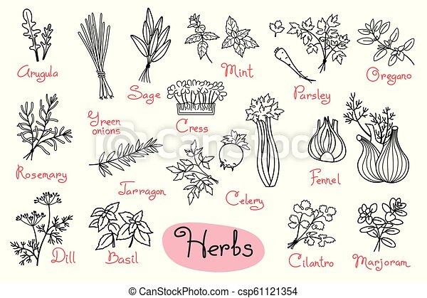 producto, conjunto, recetas, cocina, hierbas, utilizado, diseño, dibujos,  menús, paquetes
