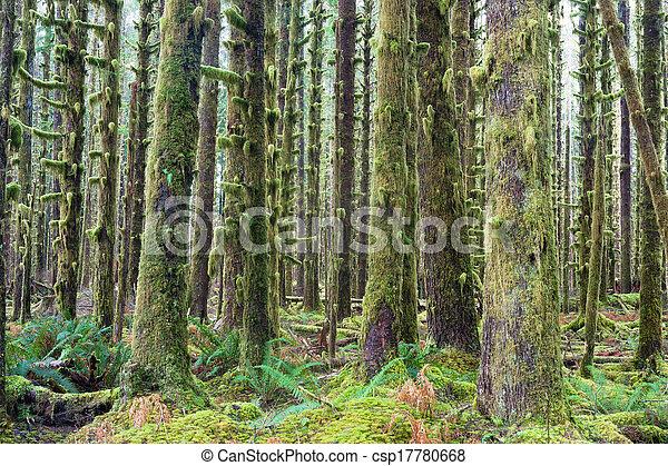 Cedros, bosques profundos, el musgo verde cubría la selva tropical - csp17780668