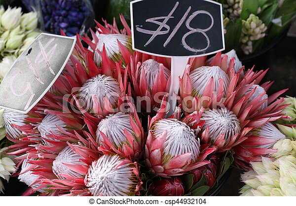 Protea Flowers for Sale - csp44932104
