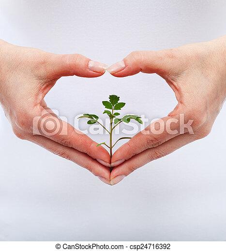 proteja, amor, natureza - csp24716392