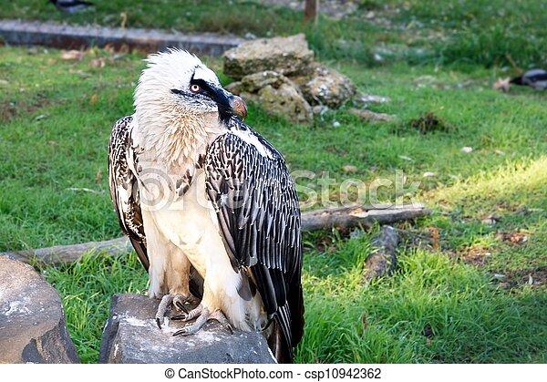 proud bird eagle a very beautiful and powerful bird