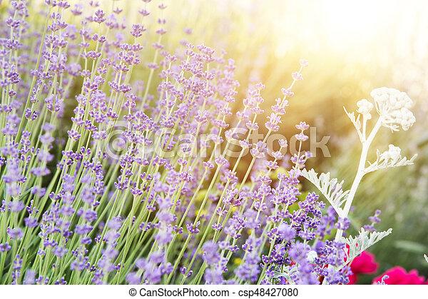Provence region of france. - csp48427080