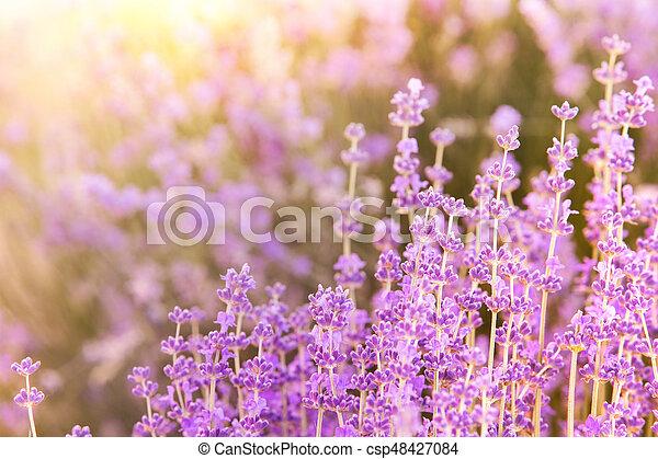 Provence region of france. - csp48427084