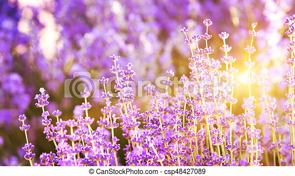 Provence region of france. - csp48427089