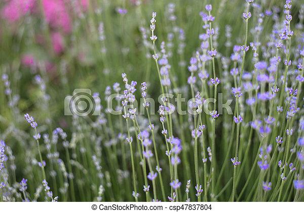 Provence region of france. - csp47837804