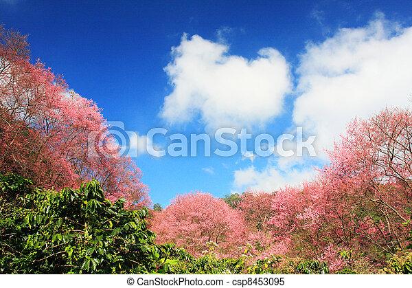 Prunus cerasoides - csp8453095