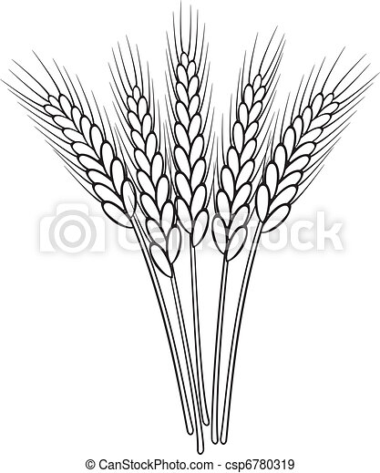 pszenica, wektor, czarnoskóry, biały, kłosie, grono - csp6780319