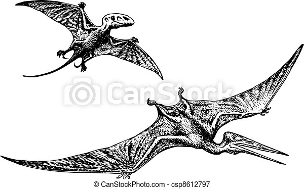 Pterodactyl or pteranodon dinosaur flying on white background. fa266b1ef