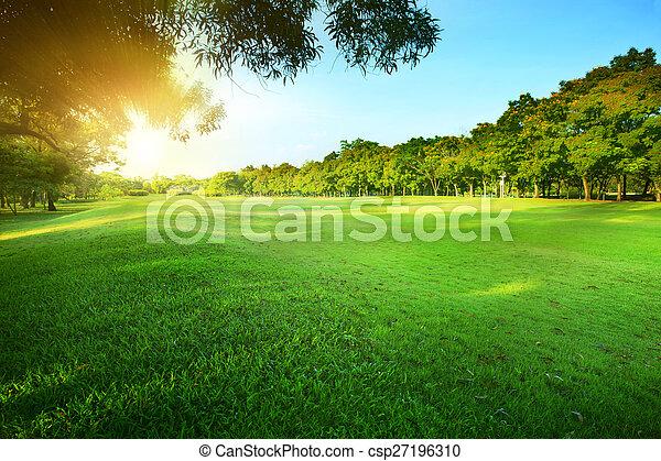 publiczność, ranne słońce, gr, piękny, lustrzany, lekka zieleń, park - csp27196310
