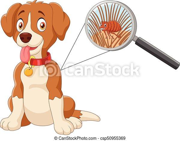 puce, vecteur, infesté, chien, illustration - csp50955369