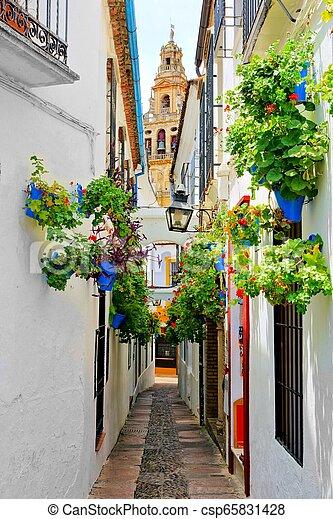 Flor llena la calle en la Ciudad Vieja de Córdoba, España con torre de catedrales - csp65831428