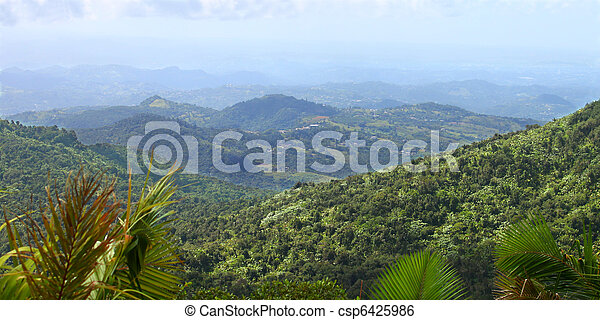 Puerto Rican Rainforest - csp6425986