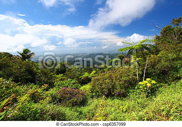 Puerto Rico Forest - csp6357099