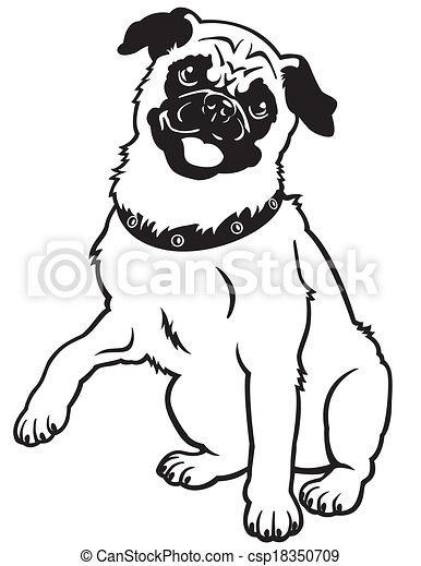 pug black white  - csp18350709