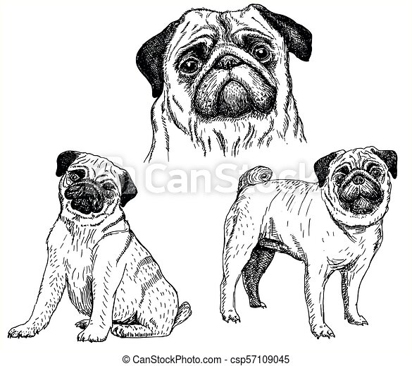 Pug Dog Vector Sketch Icon Set