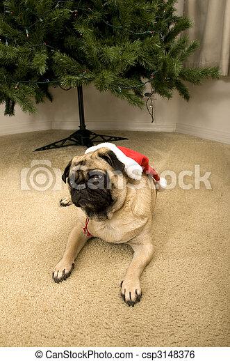 Pug Ready for Christmas - csp3148376