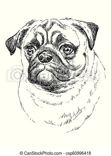 c8f8dca4ab0b Pug vector hand drawing portrait. Pug vector hand drawing ...