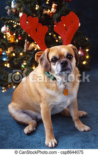 Pugsly, Peagle breed antlers - csp8644075