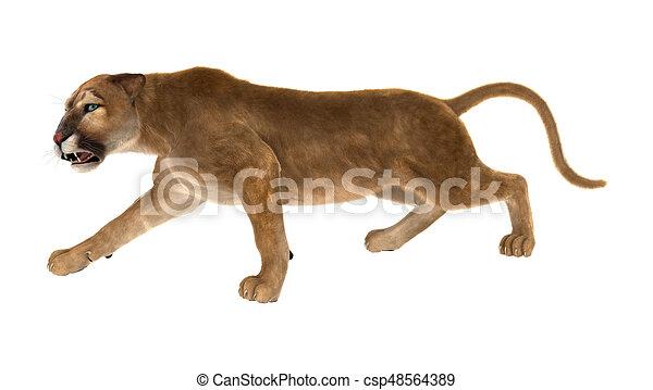 dominio promedio para mi  Puma, gatto grande, interpretazione, bianco, 3d. Puma, grande, isolato,  gatto, interpretazione, fondo, bianco, 3d.