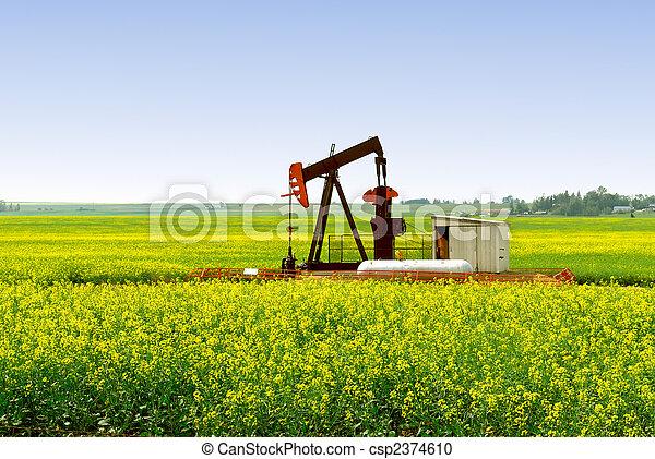 Pump Jack in Alberta Canola Field - csp2374610