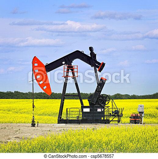 pumpa, olaj, bólint, kojotok - csp5678557
