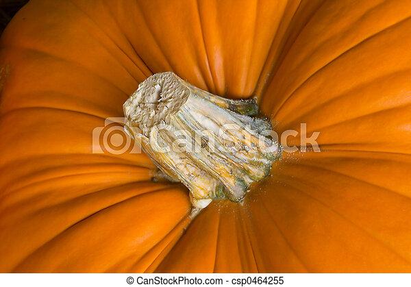 Pumpkin-2 - csp0464255