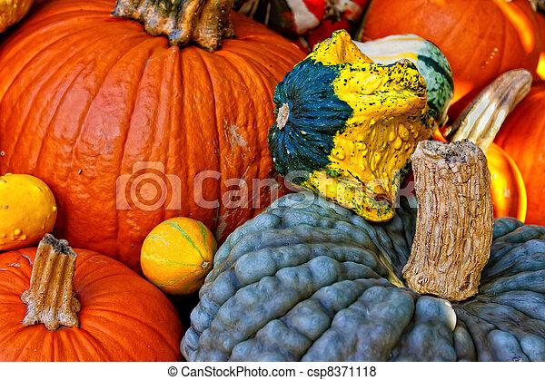 Pumpkin and squash - csp8371118