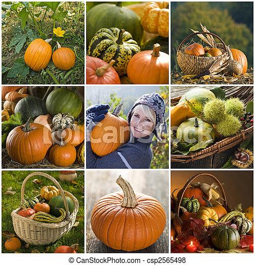Pumpkin collage - csp2565498