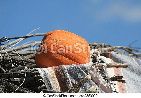 Pumpkin (Cucurbita moschata) - csp0853990