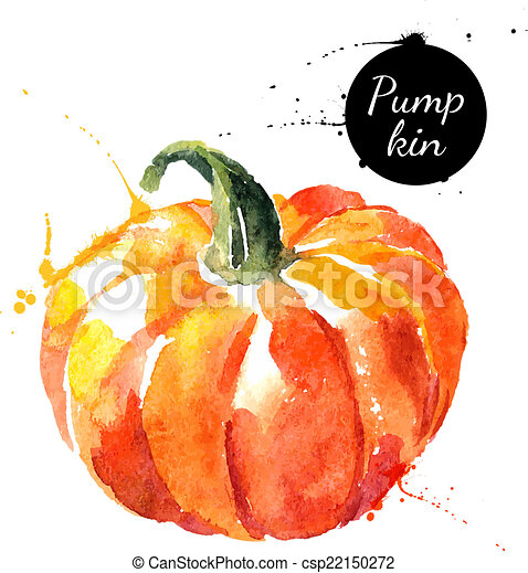 Pumpkin. Hand drawn watercolor painting on white background.  - csp22150272