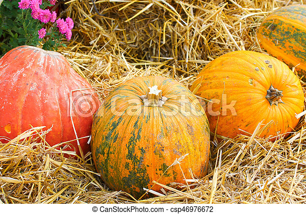 Pumpkin on hay background - csp46976672