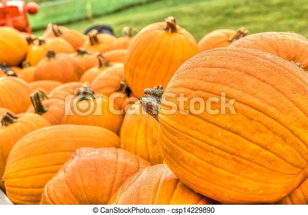 Pumpkin Patch in HDR High Dynamic Range - csp14229890