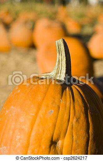 Pumpkin patch - csp2624217
