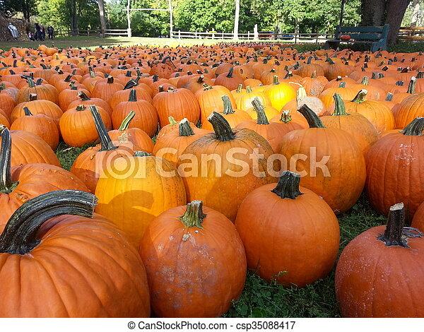 Pumpkin Patch - csp35088417