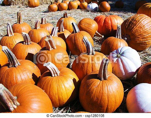 Pumpkin Patch - csp1280108
