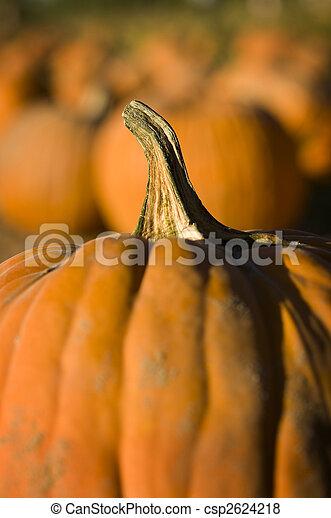 Pumpkin patch - csp2624218