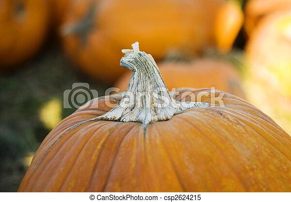 Pumpkin patch - csp2624215