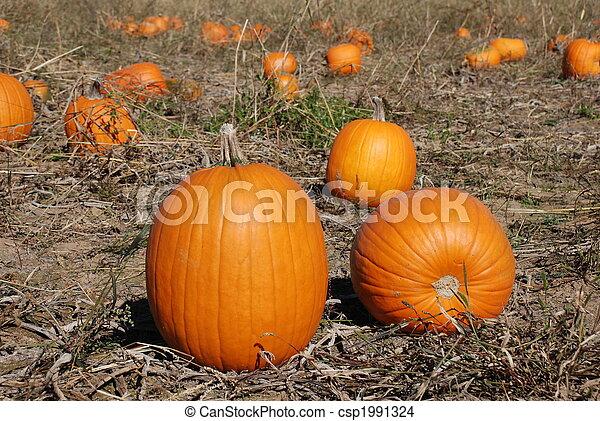 Pumpkin patch - csp1991324