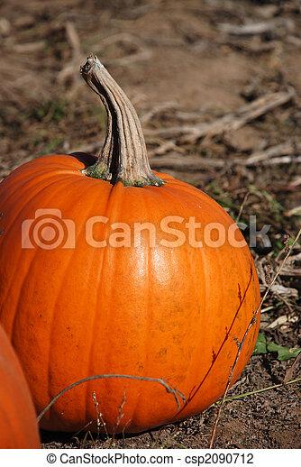Pumpkin patch - csp2090712