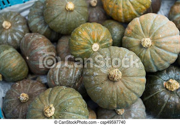 Pumpkin patch - csp49597740