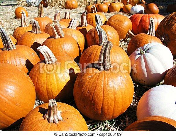 Pumpkin Patch - csp1280109