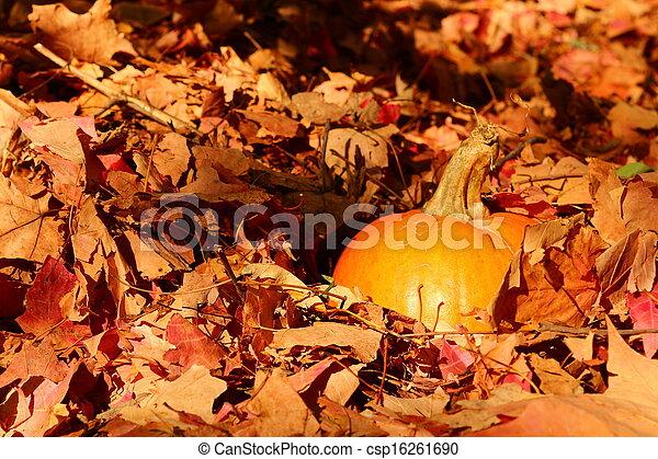 Pumpkin patch - csp16261690