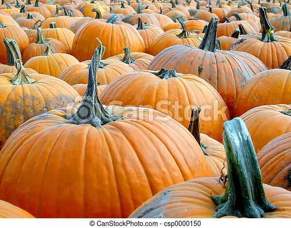 Pumpkin Patch - csp0000150