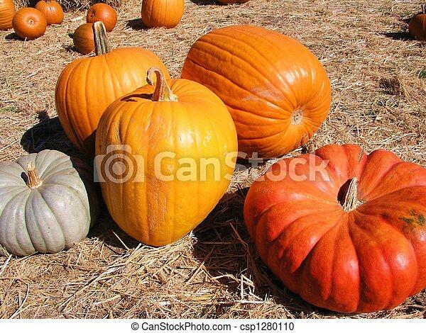 Pumpkin Patch - csp1280110