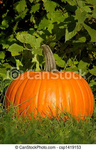 Pumpkin Patch - csp1419153