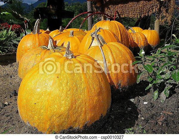 Pumpkin - csp0010327